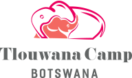 Tlouwana Camp | Chobe Game Lodge | Botswana Safari Lodge